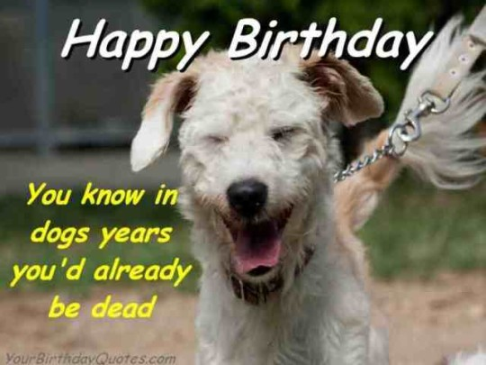 Hilarious Birthday Wishes Image With Greeting Dog