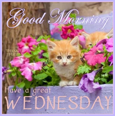 Wishes and greetings for wednesday morning with beautiful quotes for wishes and greetings for wednesday morning with beautiful quotes m4hsunfo
