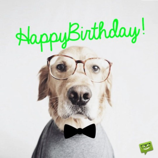 Wonderful Dog Wishing Image For A Special Birthday tg_j9k